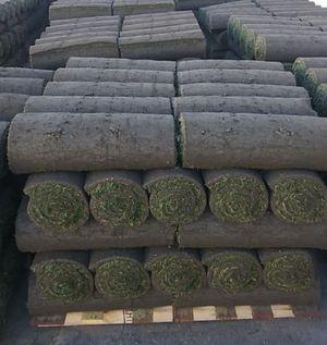 Farm Fresh Sod for Sale in Escondido, CA