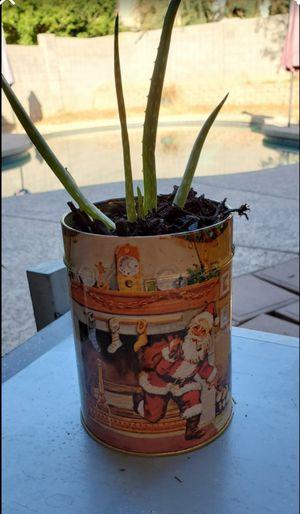 Live Aloe In Vintage Santa Tin for Sale in Goodyear, AZ