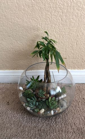 Terrarium with real plant money tree and fake plant succulent Hi end table decoration for Sale in Las Vegas, NV