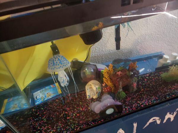 2 55 gallon fish tanks w/stand