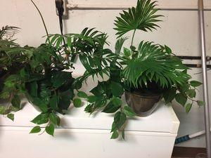 Faux decorative plants for Sale in Oakbrook Terrace, IL