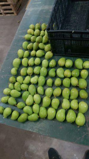 Mangos verdes tiernos for Sale in Houston, TX