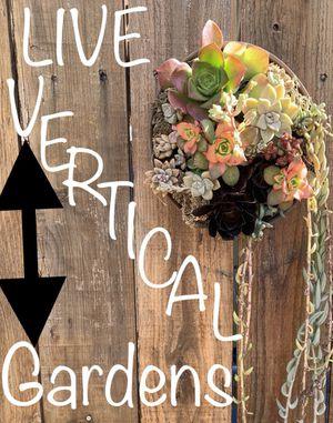 Live Succulent gardens for Sale in Costa Mesa, CA