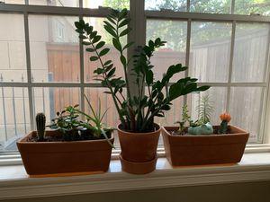 Aloe Vera, Succulents, leafy plant, terra-cotta pots, Miracle Gro soil for Sale in Houston, TX