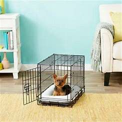 Frisco Heavy Duty Fold & Carry Single Door Collapsible Wire Dog Crate, 22 inch for Sale in Toms River, NJ