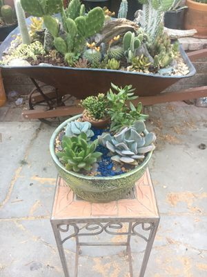 Rustic Vase With Variety Of Succulent & Tany Clay Vase With Succulent for Sale in Fontana, CA