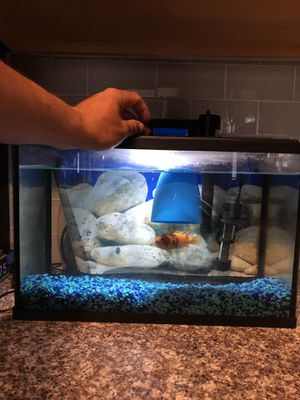 5.5 gallon tank with African ciclid for Sale in Littleton, CO