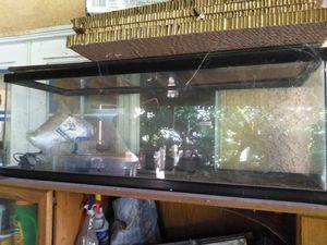 Aquarium fish thank for Sale in Burbank, CA