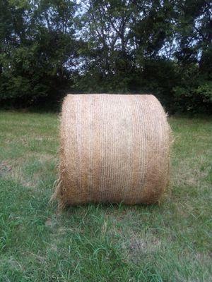 Hay for Sale in Murfreesboro, TN
