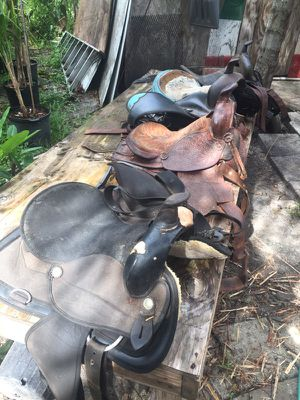 Horse Seats for Sale in Lakeland, FL