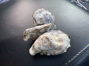 Fresh Oysters for Sale in Seattle, WA