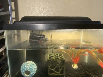 Fish Tank And Accessories for Sale in Fresno,  CA