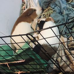 Guinea pig cage for Sale in Goodyear,  AZ