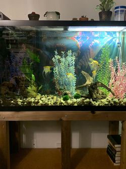 110 Gallon Fish Tank With Stand & Extras for Sale in Monroe,  WA