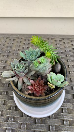 Unique handmade ceramic pot with built-in plate and Succulents for Sale in Vancouver, WA