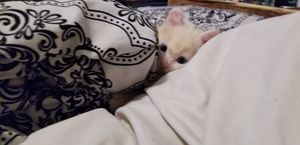 Kittens available for Sale in Rancho Cucamonga, CA