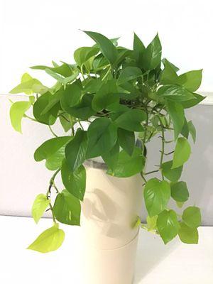House Plants for Sale in Acworth, GA