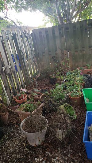 Plants, Garden Bricks for Sale in Deerfield Beach, FL