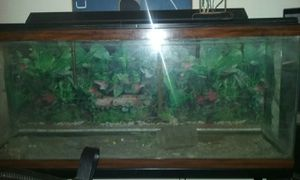 55 Gallon Fish Tank w/filter, stand, etc., for Sale in Cleveland, OH