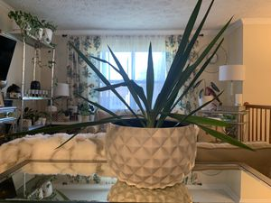 Spike Plant for Sale in Upper Marlboro, MD
