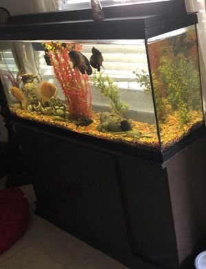 Fish tank 55 gallons everything including no fish for Sale in Clearwater, FL
