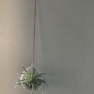 Air Plant & Holder for Sale in Aurora, CO