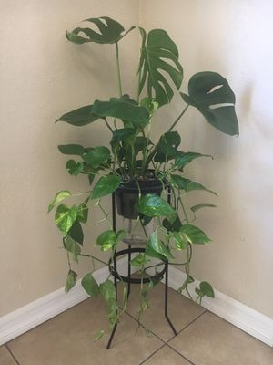 House plants for Sale in Fullerton, CA