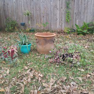 Plants for Sale in Dallas, TX