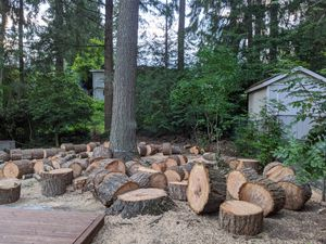 Free Fir Rounds for Sale in Bellevue, WA