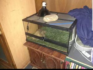 Snake tank for Sale in Tunnelton, WV