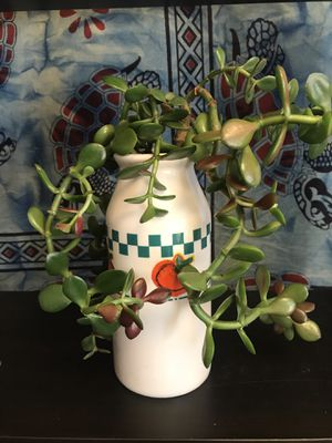 Weeping jade - live succulent for Sale in Strongsville, OH