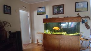 125 gallon fish tank for Sale in Laveen Village, AZ