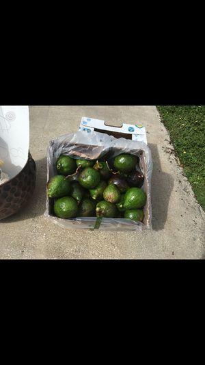 Avocados for Sale in St. Petersburg, FL