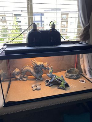 Bearded Dragon setup (read description) for Sale in Wilsonville, OR