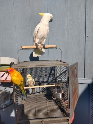 Large bird traveling cage perfect for any size of bird for Sale in Lakeside, CA