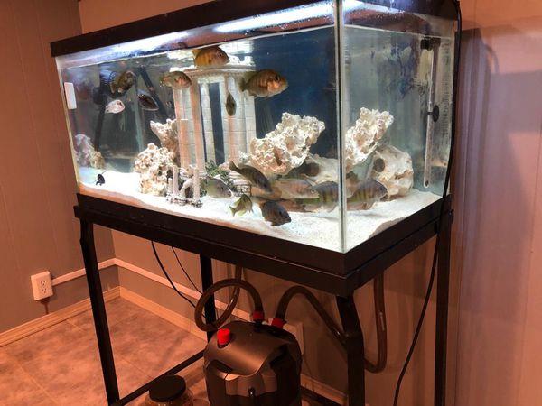 55 gallon cichlid fish tank