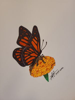 Butterfly and Marigold for Sale in Gilmer, TX