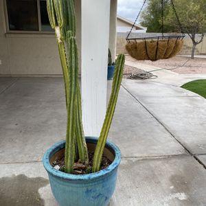Cactus + Pot For Sale for Sale in Tempe, AZ