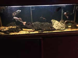 125 gallon fresh water fish tank for Sale in Denver, CO