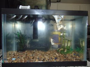 3 gallon fish tank with filter and decor for Sale in Las Vegas, NV