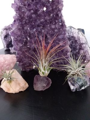 Set of 3 Believed Natural Crystals and Tillandsia Ionantha Air Plant. Amethyst, Quartz Formation and Rainbow Fluorite. $30 FIRM. for Sale in Alta Loma, CA