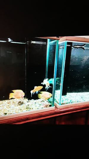 Large fish tanks for Sale in Knoxville, TN
