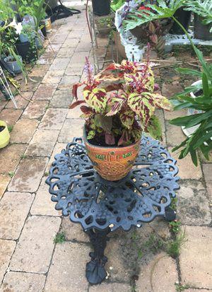 Marble Leaf Bicolor Coleus In Aztec Style Pot for Sale in Poinciana, FL