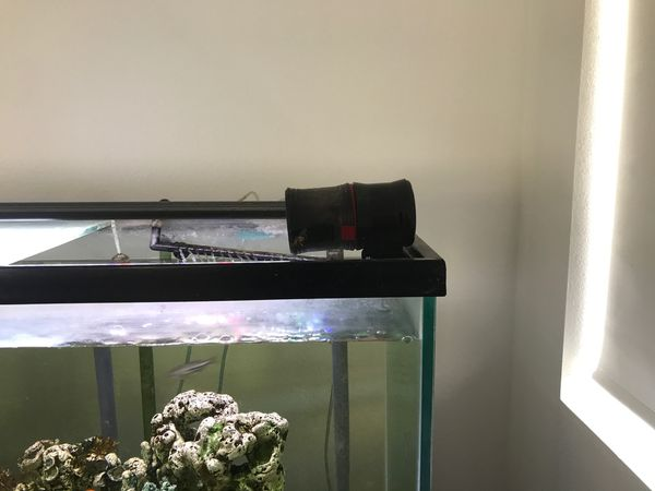 Fresh Water Fish Tank Everything Included