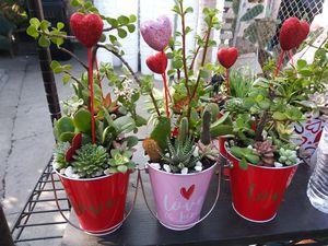 Succulents en cubetitas for Sale in Cudahy, CA