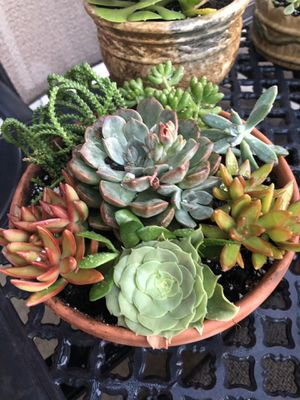Succulent arrangements made to order or purchase what I have currently made. Starting at $12 for Sale in Corona, CA