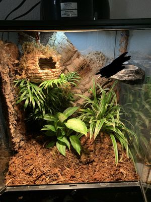 BIOACTIVE EXOTERRA ENCLOSURE for Sale in Fort Worth, TX