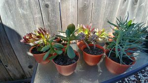 Succulents plants for Sale in Vacaville, CA