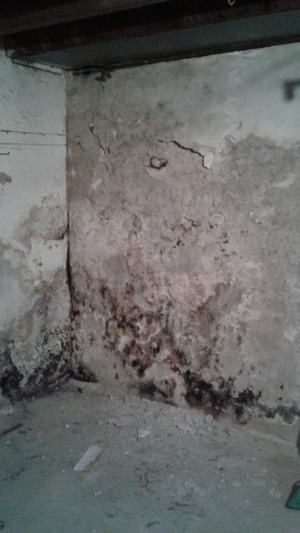 Mold romevel/concrete finish for Sale in MD, US