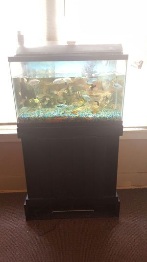 FISH TANK WITH FISH for Sale in Dearborn, MI